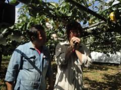 なお(だいなお) 公式ブログ/梨収穫。in静岡県浜松市北区 画像1