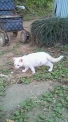 なお(だいなお) 公式ブログ/今日の猫。 画像1