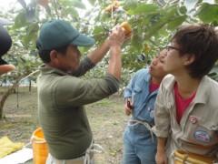 なお(だいなお) 公式ブログ/柿の収穫&選果場。in奈良県五条市 画像1