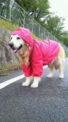 水野美旺 公式ブログ/愛犬☆梅雨時のファッション 画像1