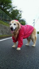 水野美旺 公式ブログ/愛犬☆梅雨時のファッション 画像2