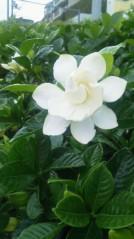 水野美旺 公式ブログ/大好きな花!! 画像1