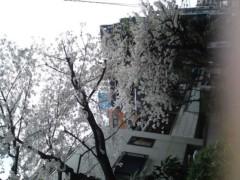 銭元玉香 公式ブログ/お花見かしら 画像1