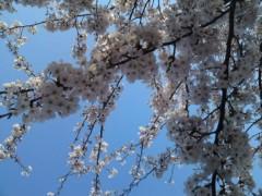 銭元玉香 公式ブログ/サクラサク 画像2