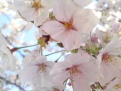 銭元玉香 公式ブログ/サクラサク 画像1