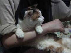 グレート義太夫 公式ブログ/猫・猫・猫! 画像2