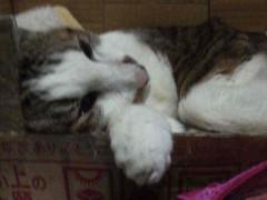 グレート義太夫 公式ブログ/猫・猫・猫! 画像1