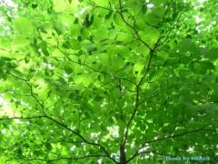 紺野なる プライベート画像 木の葉
