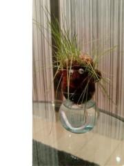 エイジア エンジニア 公式ブログ/芝生のジョニー♪ 画像3