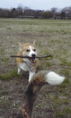 エイジア エンジニア 公式ブログ/犬との生活byZRO 画像1