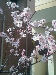 エイジア エンジニア 公式ブログ/春ですな〜 画像1