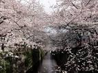 エイジア エンジニア 公式ブログ/さくら by SHUHEI 画像1