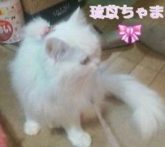 媛華(mamaLove) 公式ブログ/にゃんにゃぁん 画像1