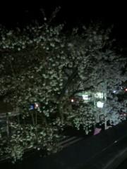 いでけんじ 公式ブログ/夜桜♪ 画像1
