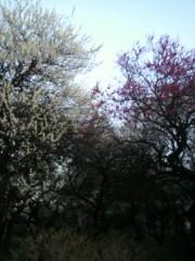 いでけんじ 公式ブログ/春はそろそろ♪ 画像1