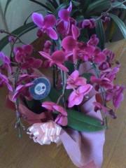 池内ひろ美 公式ブログ/鉢植えのお花 画像1