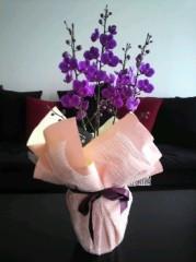 池内ひろ美 公式ブログ/お花が届きました 画像1