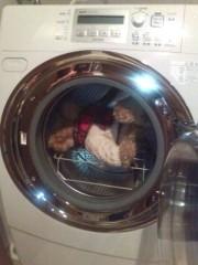池内ひろ美 公式ブログ/ぬいぐるみを洗濯乾燥機で 画像1
