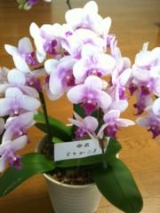 池内ひろ美 公式ブログ/胡蝶蘭が咲きました♪ 画像2