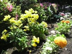 池内ひろ美 公式ブログ/今日のお庭 画像1