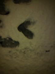 花奈 公式ブログ/雪 画像2