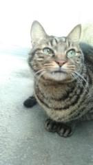 石川美佳 公式ブログ/おはよう☆今朝の愛猫トラ次郎☆ 画像1