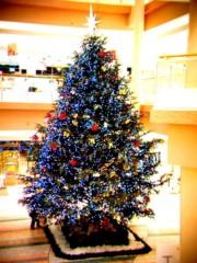 齊藤美絵 公式ブログ/クリスマスツリー@小田原ダイナシティ 画像1