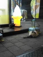 植田ゆう希 公式ブログ/濱猫 画像1