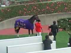 小堺翔太 公式ブログ/有馬記念・ヴィクトワールピサ 画像1
