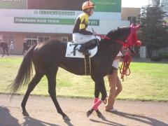 小堺翔太 公式ブログ/で、やっぱり馬が好き 画像2