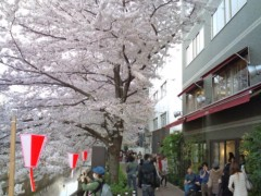 小堺翔太 公式ブログ/散りゆく桜と反省と 画像1
