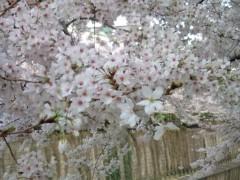 小堺翔太 公式ブログ/散りゆく桜と反省と 画像3
