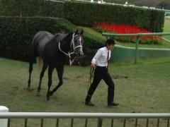 小堺翔太 公式ブログ/1分数秒に見た「競馬」 画像3