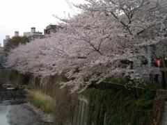 小堺翔太 公式ブログ/散りゆく桜と反省と 画像2