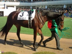 小堺翔太 公式ブログ/【新馬戦】渋いニュースター? 画像1
