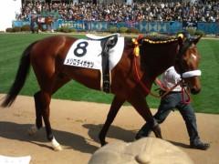 小堺翔太 公式ブログ/昨日の競馬&今日のケイバ予想 画像2