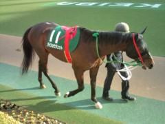 小堺翔太 公式ブログ/根岸ステークスの馬たち 画像2