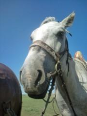 小堺翔太 公式ブログ/【内モンゴル日記・2】内モンゴルの馬たち 画像2
