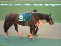 小堺翔太 公式ブログ/根岸ステークスの馬たち 画像3