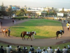 小堺翔太 公式ブログ/で、やっぱり馬が好き 画像1