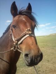 小堺翔太 公式ブログ/【内モンゴル日記・2】内モンゴルの馬たち 画像1