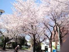 武田真由美 公式ブログ/桜を見ながら 画像1