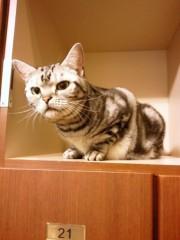 石神 瑤生子 公式ブログ/久しぶりの猫カフェ 画像3