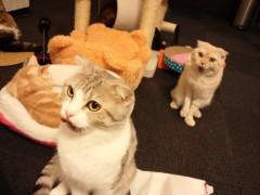 石神 瑤生子 公式ブログ/猫とターフィーと私 画像1