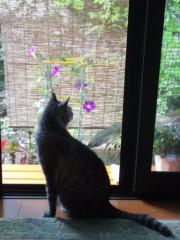 石神 瑤生子 公式ブログ/我が家のアイドル 画像2