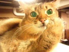 石神 瑤生子 公式ブログ/やっぱり猫が好き過ぎる!!! 画像3
