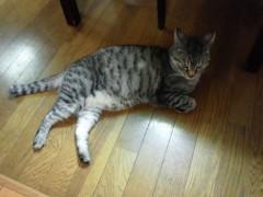石神 瑤生子 公式ブログ/猫〜 画像2