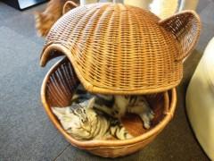石神 瑤生子 公式ブログ/猫カフェ 画像3