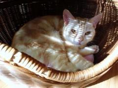 石神 瑤生子 公式ブログ/久しぶりの猫カフェ 画像1