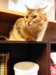 石神 瑤生子 公式ブログ/久しぶりの猫カフェ 画像2